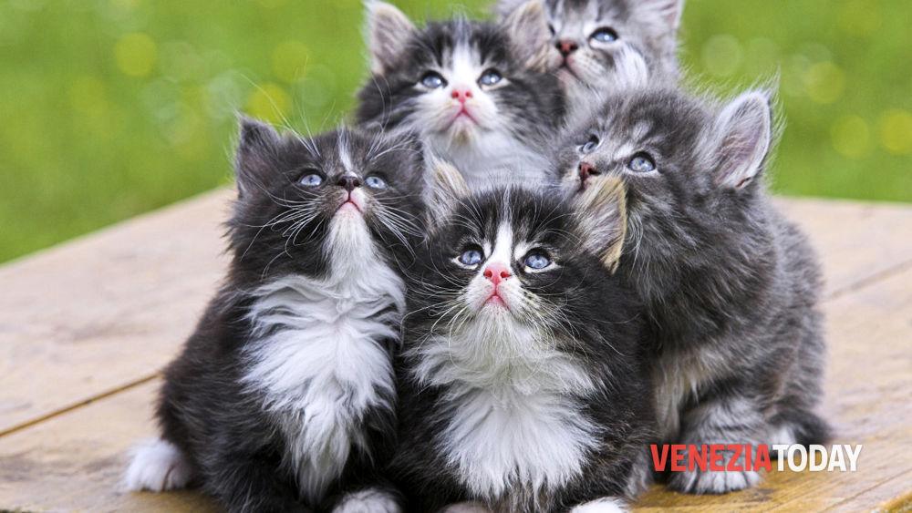 Strage Di Gatti Ai Saloni Di Chioggia